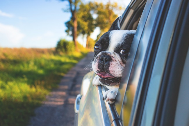 Long Distance Moving with your pet